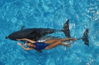 dolphin_cove-1