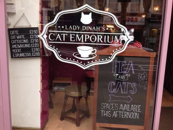 lady-dinah-s-cat-emporium (1)