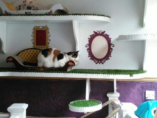 lady-dinah-s-cat-emporium
